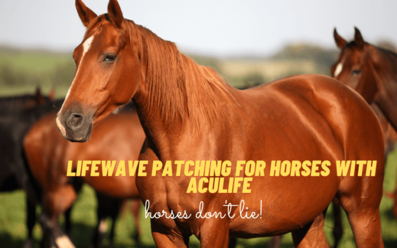 LifeWave patching for horses Aculife